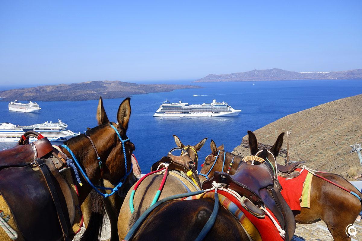 Embouteillage d'ânes à Fira