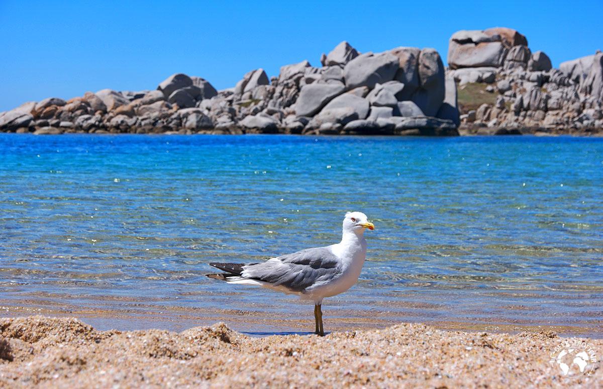Un oiseau sur une plage des îles Lavezzi