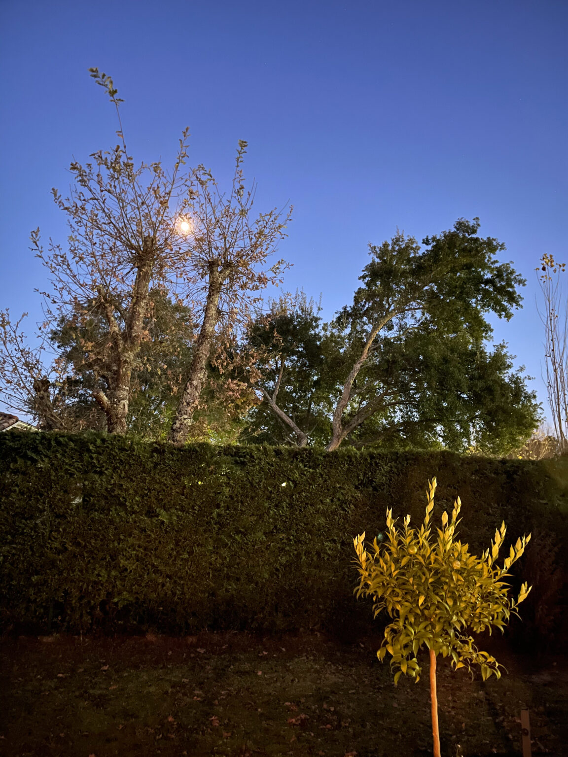 Photo de nuit prise à l'Phone 12 Pro Max