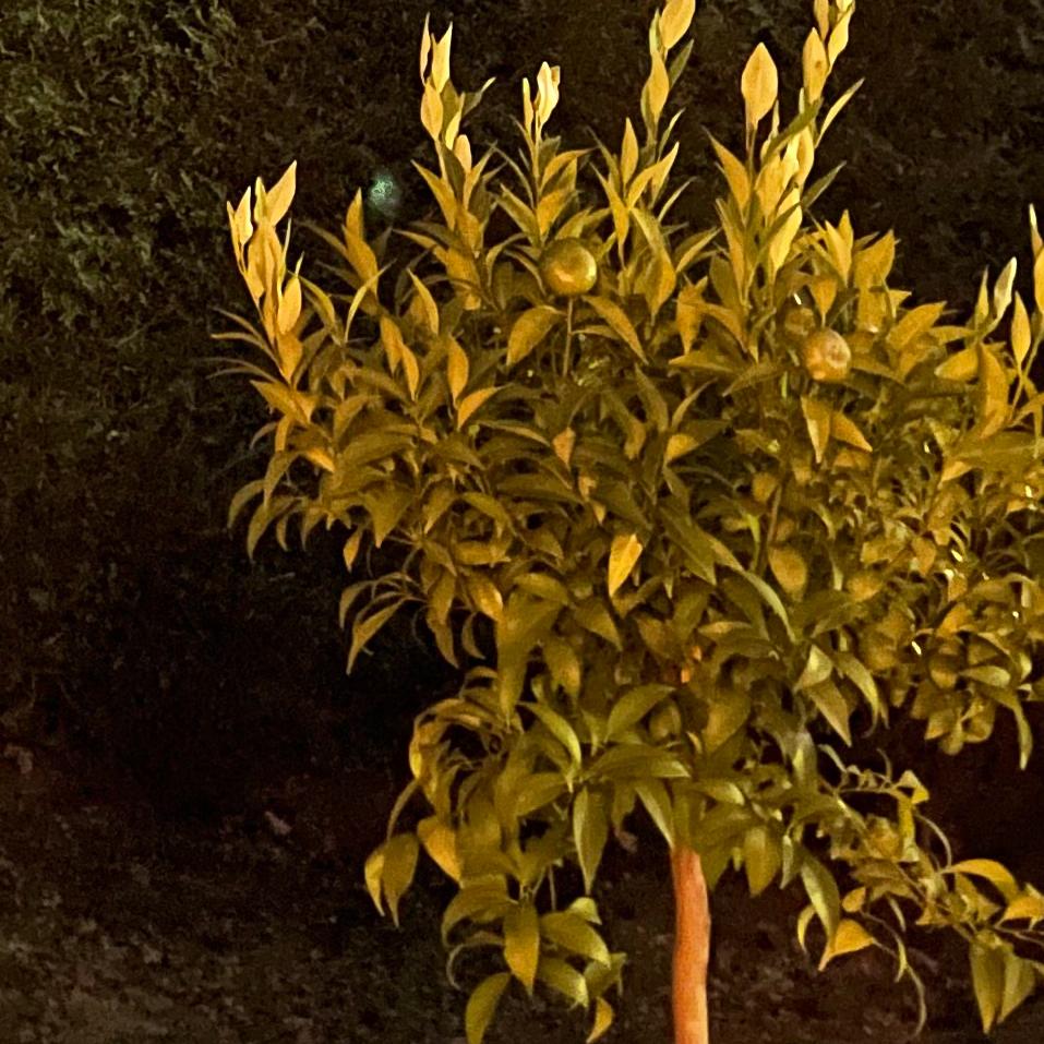 Photo de nuit prise à l'Phone 12 Pro Max - CROP